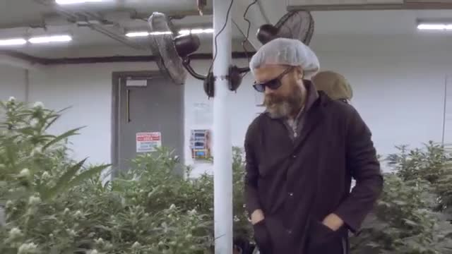 From seed to sale: producers, Producers, Go legal! : cultivating Oregon's cannabis...