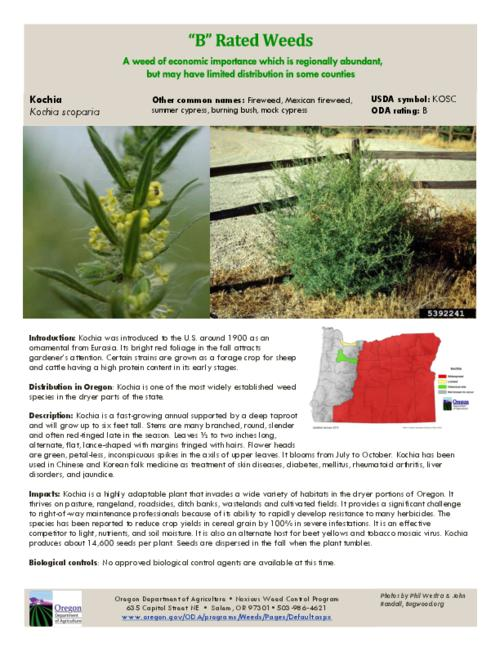 This archived document is maintained by the Oregon State Library as part of the Oregon Documents Depository Program.  It is for informational purposes and may not be suitable for legal purposes., Title from PDF caption (viewed on July 23, 2015)., Part of the series Oregon state noxious weed list., Mode of access: Internet from the Oregon Government Publications Collection., Text in English.