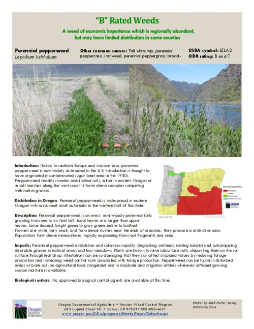 This archived document is maintained by the Oregon State Library as part of the Oregon Documents Depository Program.  It is for informational purposes and may not be suitable for legal purposes., Title from PDF caption (viewed on July 24, 2015)., Part of the series Oregon state noxious weed list., Mode of access: Internet from the Oregon Government Publications Collection., Text in English.