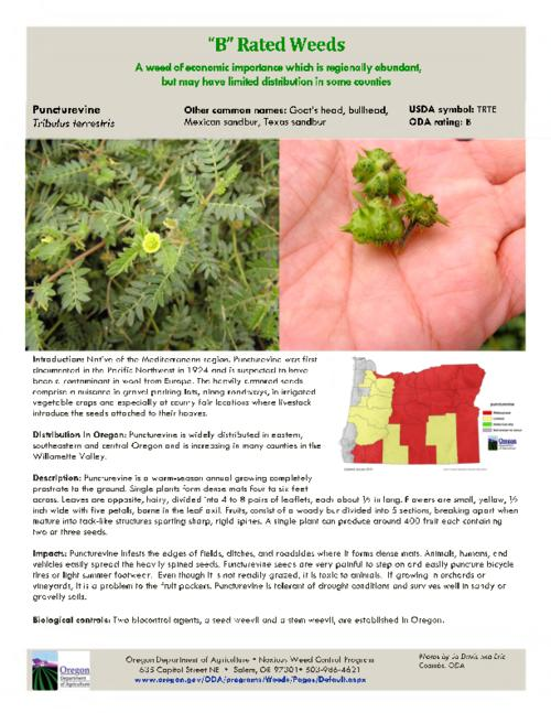 This archived document is maintained by the Oregon State Library as part of the Oregon Documents Depository Program.  It is for informational purposes and may not be suitable for legal purposes., Title from PDF caption (viewed on August 4, 2015)., Part of the series Oregon state noxious weed list., Mode of access: Internet from the Oregon Government Publications Collection., Text in English.