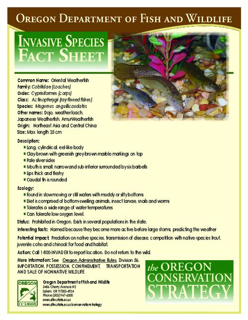 "This archived document is maintained by the Oregon State Library as part of the Oregon Documents Depository Program.  It is for informational purposes and may not be suitable for legal purposes., Title from PDF caption (viewed on July 28, 2010), ""The Oregon Conservation Strategy."", Mode of access: Internet from the Oregon Government Publications Collection."