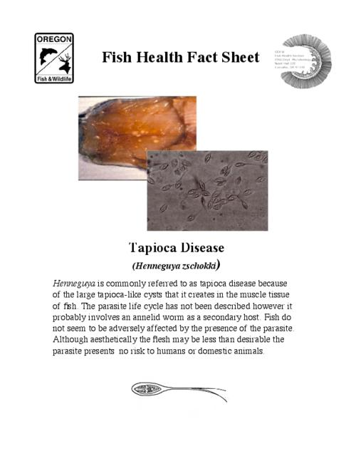 This archived document is maintained by the Oregon State Library as part of the Oregon Documents Depository Program.  It is for informational purposes and may not be suitable for legal purposes., Title from PDF caption (viewed on September 3, 2015)., Henneguya is commonly referred to as tapioca disease because of the large tapioca-like cysts that it creates in the muscle tissue of fish., Mode of access: Internet from the Oregon Government Publications Collection., Text in English.
