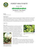 Douglas-fir twig weevil: Cylindrocopturus fumissi, Cylindrocopturus fumissi