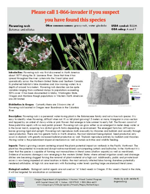 This archived document is maintained by the Oregon State Library as part of the Oregon Documents Depository Program.  It is for informational purposes and may not be suitable for legal purposes., Title from PDF caption (viewed on July 17, 2015)., Part of the series Oregon state noxious weed list., Mode of access: Internet from the Oregon Government Publications Collection., Text in English.