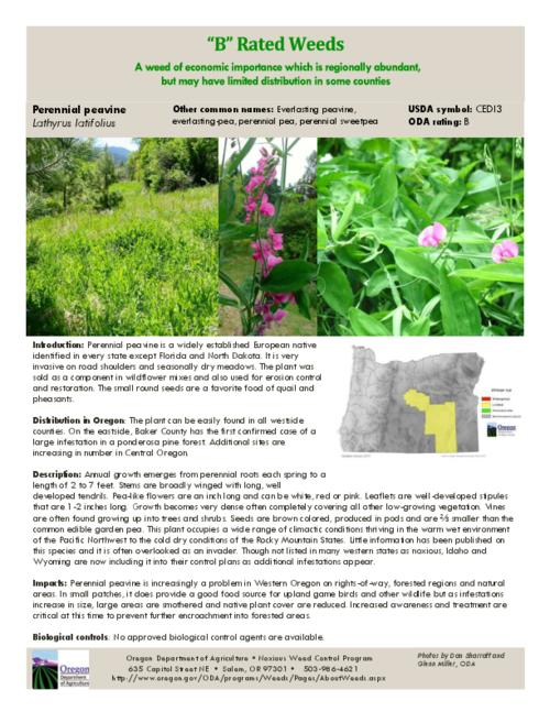 This archived document is maintained by the Oregon State Library as part of the Oregon Documents Depository Program.  It is for informational purposes and may not be suitable for legal purposes., Title from PDF caption (viewed on July 20, 2015)., Part of the series Oregon state noxious weed list., Mode of access: Internet from the Oregon Government Publications Collection., Text in English.