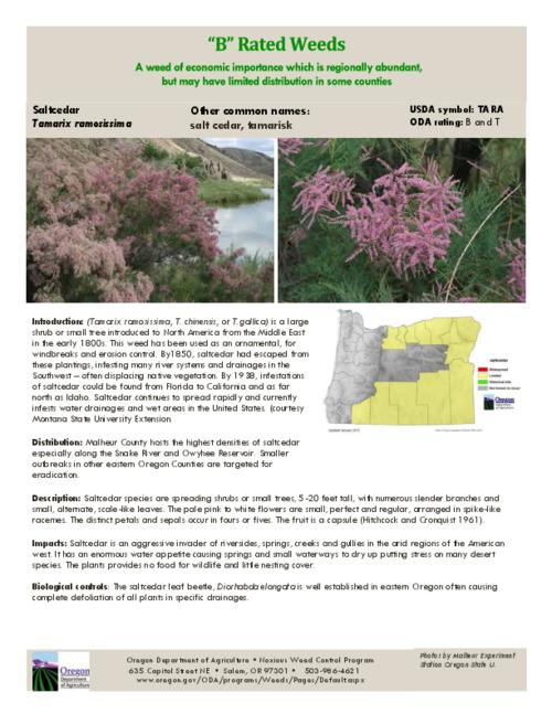 This archived document is maintained by the Oregon State Library as part of the Oregon Documents Depository Program.  It is for informational purposes and may not be suitable for legal purposes., Title from PDF caption (viewed on July 21, 2015)., Part of the series Oregon state noxious weed list., Mode of access: Internet from the Oregon Government Publications Collection., Text in English.