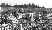 Oregon agricultural scenes during the late 1930s