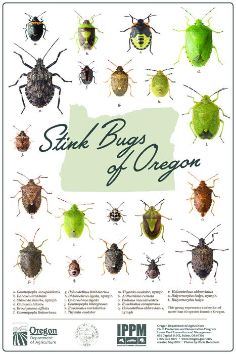"Shows 20 species of stink bugs., ""created May 2017."", ""This group represents a selection of more than 50 species found in Oregon."", Title from PDF caption (viewed on June 15, 2017)., This archived document is maintained by the State Library of Oregon as part of the Oregon Documents Depository Program. It is for informational purposes and may not be suitable for legal purposes., Mode of access: Internet from the Oregon Government Publications Collection., Text in English."