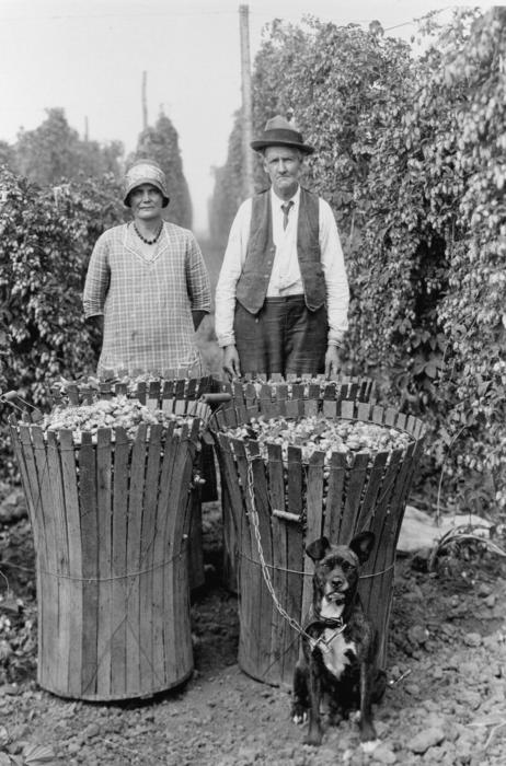 An elderly man and woman are standing behind four baskets of hops in a Willamette Valley hop field. The woman is wearing a dress, which was typical of older women working in the hops. Their dog is sitting in front, chained to a basket. It was common for hop pickers to bring both dogs and children to the hop yards where families might be camped for a month while the crop was harvested., Courtesy of Oregon State Library