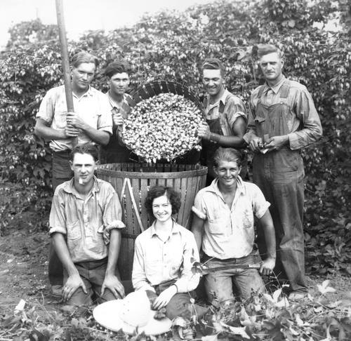 "A hop crew stands around a basket of hops. There are four men standing behind the barrel with two of them pouring another basket of hops into the one they're standing next to. In front of the basket are two men and a woman. The one young man to the right of the picture is holding a machete in his lap, used to cut the vines from the wires, and the man on the left, holding the pole is the ""Wire Man"" who unhooked the wires with the hop vines from the horizontal wires to lower them for picking., Courtesy of Oregon State Library"