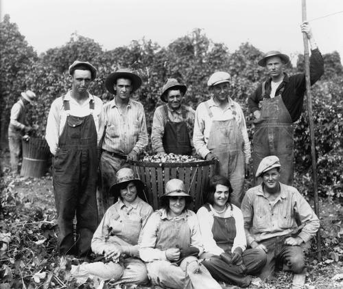 "Hop crew. There are five men standing behind a basket of picked hops and three women and one man are sitting or kneeling on the ground in front of the basket. Most of the work crew members in the picture are wearing overalls, all the men are wearing hats, as are two of the three women. The man with the pole is the ""Wire Man"" who unhooked the wires to lower the hop vines so they could be picke, Courtesy of Oregon State Library"