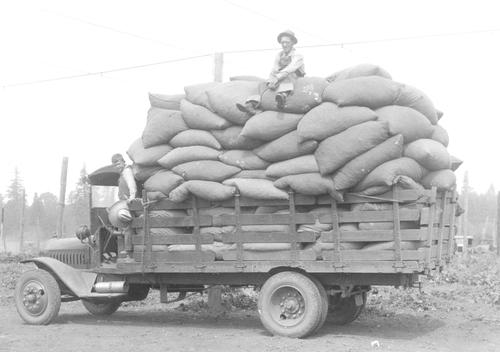 A large truck is hauling an oversized load of sacks of hops. There is an older man sitting on top of the stack and there is a small boy standing in the door way of the truck. Both are wearing overalls, standard work clothing., Courtesy of Oregon State Library