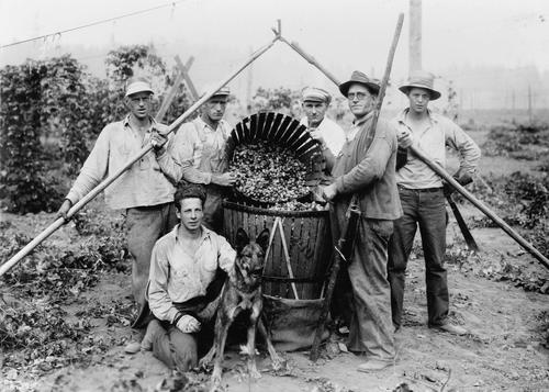A group of six men are standing around a basket of hops. Two of the men are holding another basket, tipping it forward, so you can see inside. The man in the front is kneeling down beside a German Shepherd., Courtesy of Oregon State Library