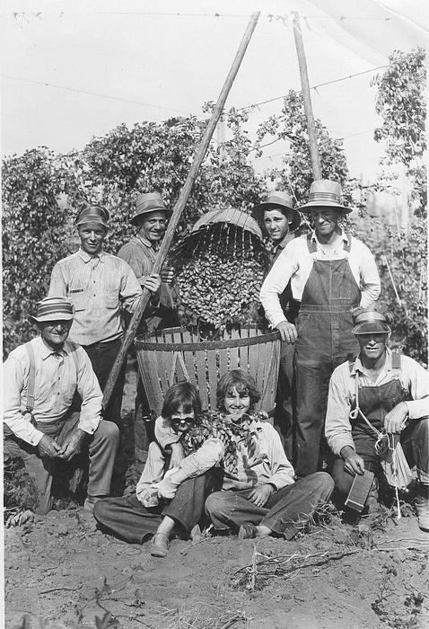 A hop crew is gathered around for a photo out in the field. There are Four men standing behind a basket of hops and the two in the middle are pouring a basket of hops into the one they are standing next to. There are two men on either side kneeling and two girls sitting in front of the basket. The girl on the left is wearing sunglasses and has them tipped forward and the two girls have a piece of the hop vines over their shoulders., Courtesy of Oregon State Library